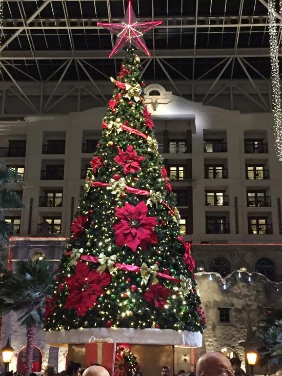 Christmas Trees 2014 - 03
