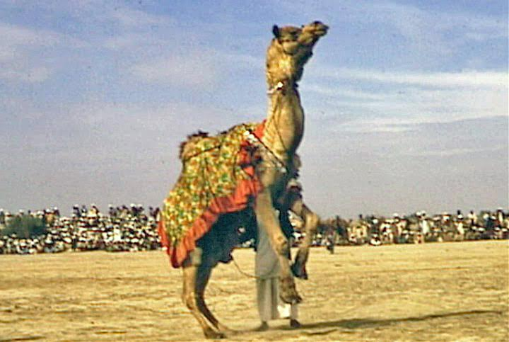 Behold the Mighty Dromedary