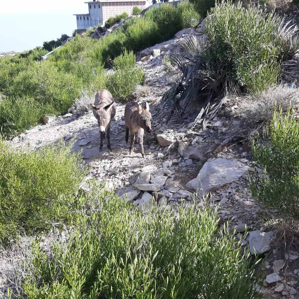 The species of fluffy donkeys at Gorakh Hills