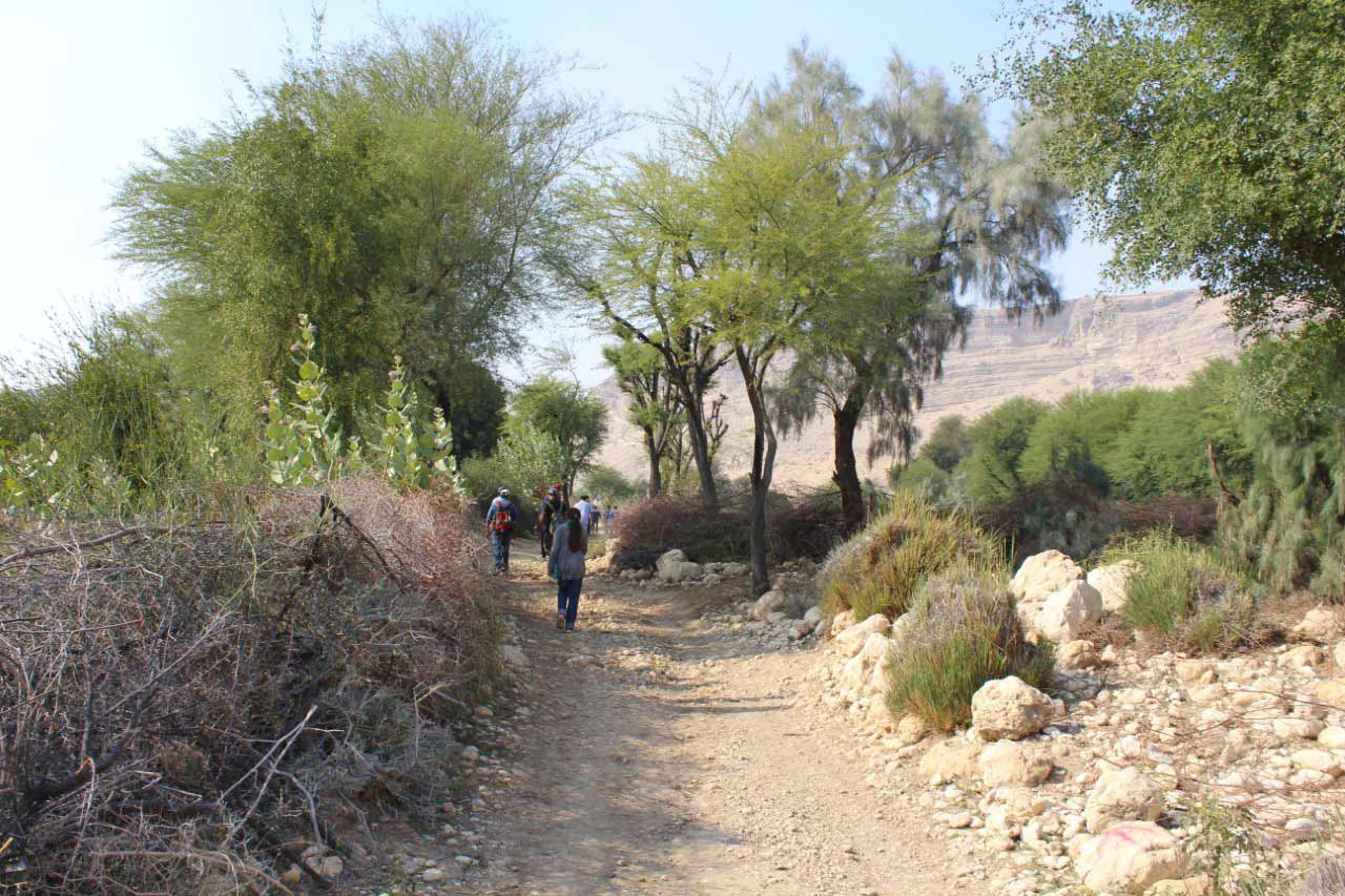 "The one hour of trekking path from the Rani Kot Restaurant to the "" Pariyon Jo Tar"", no vehicle can go only motor bike or walking is the only way to reach there."