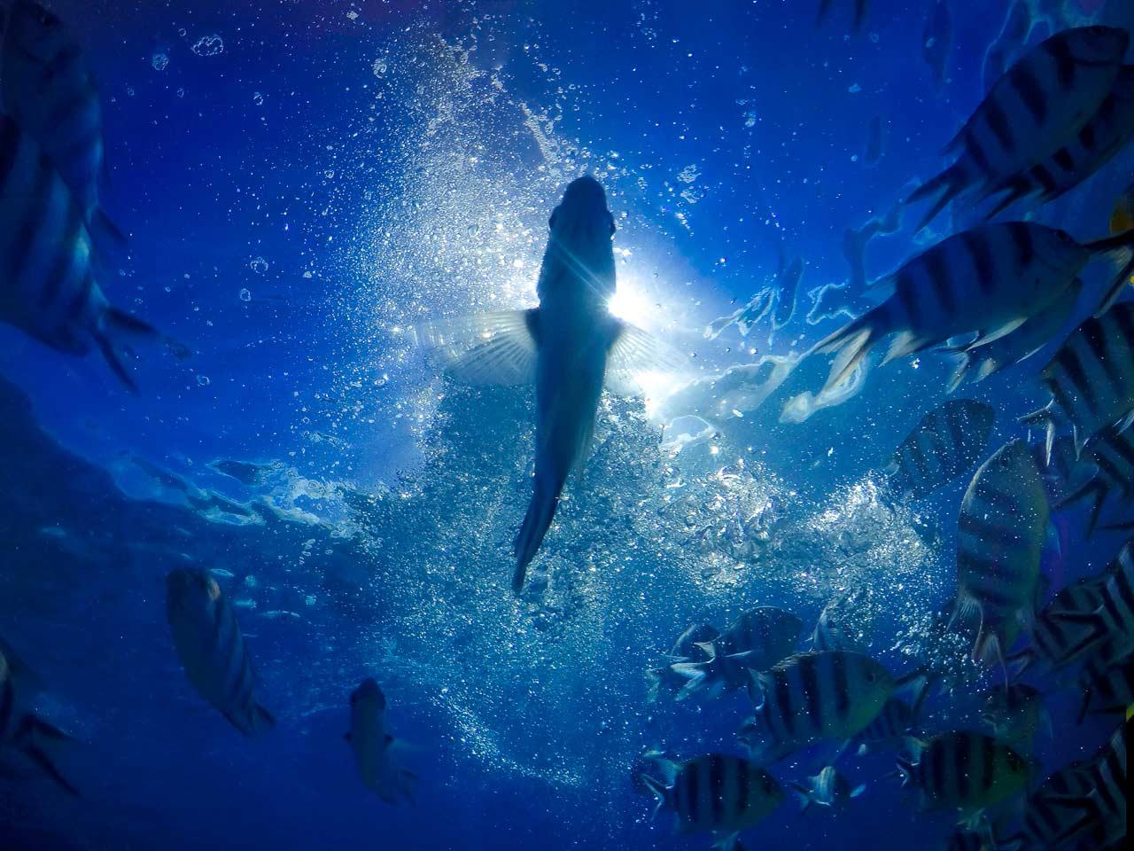 "Judges' Selection (third, tie): ""Underwater Fairytale"" in BoraBora by Vanessa Kearns."