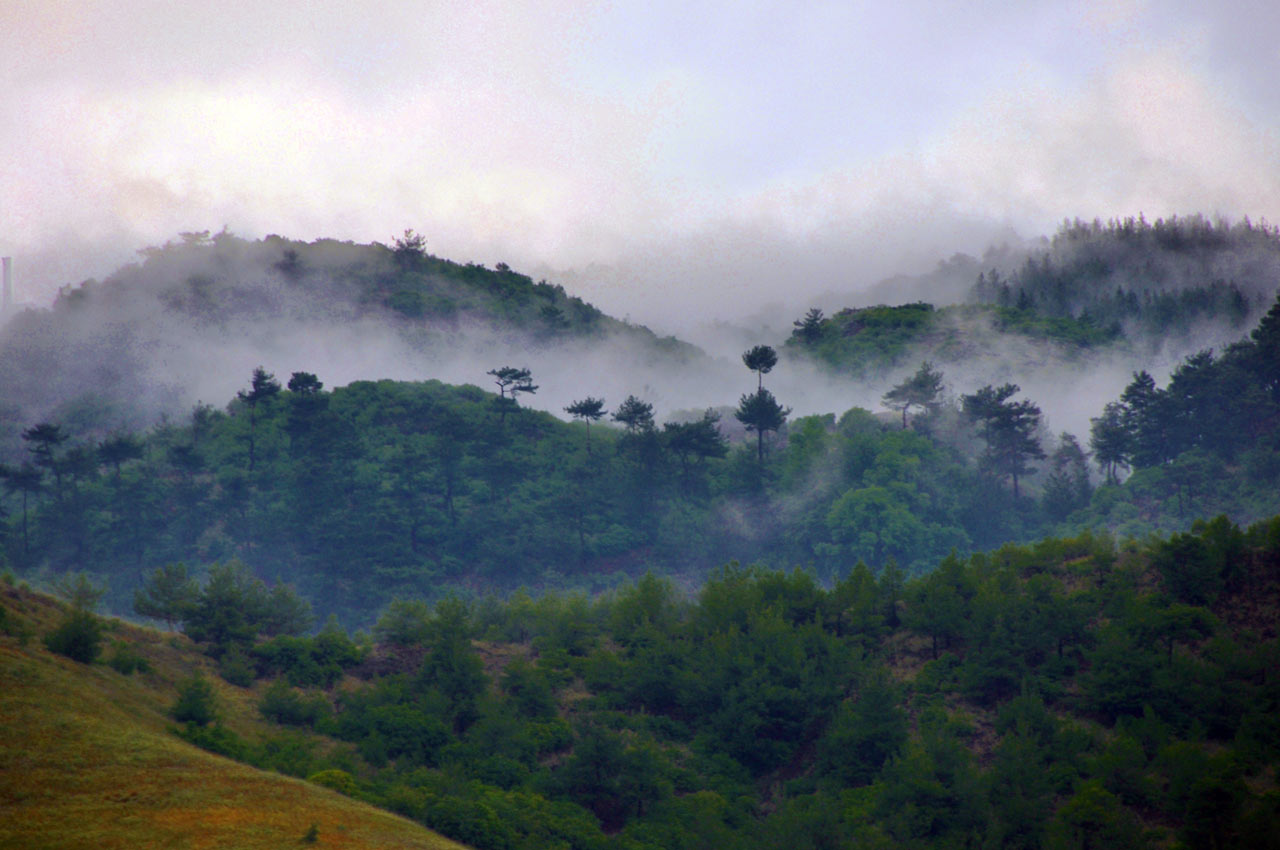 "Members' Favorite (third, tie): ""The Foggy Forest"" in Gaziantep, Turkey by Cengiz Vur"