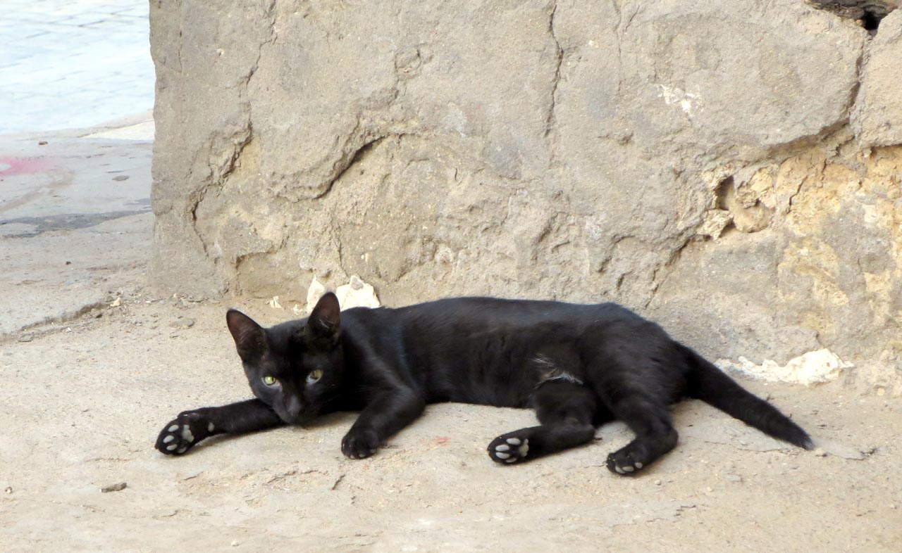 Many cats, feral and domesticated, reside in Al-Balad. © Mark Lowey
