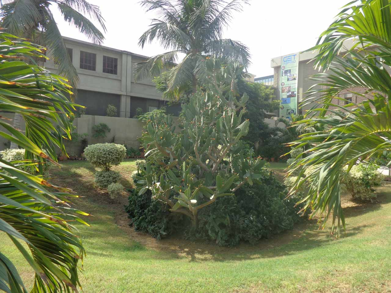 Greenery at the entrance of the school gate