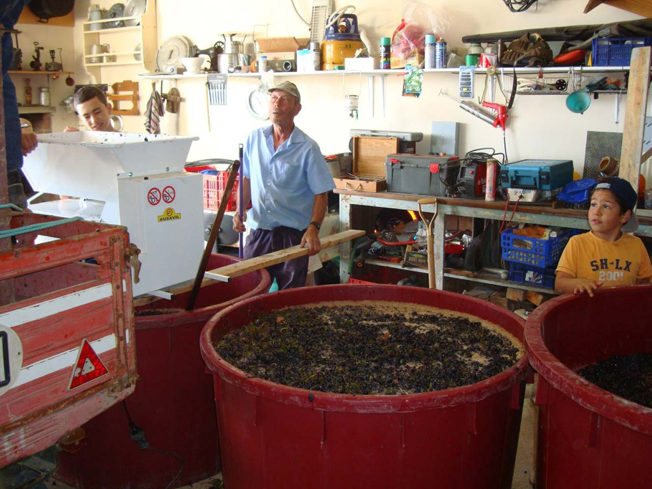 Grapes in the 'Mash Barrel