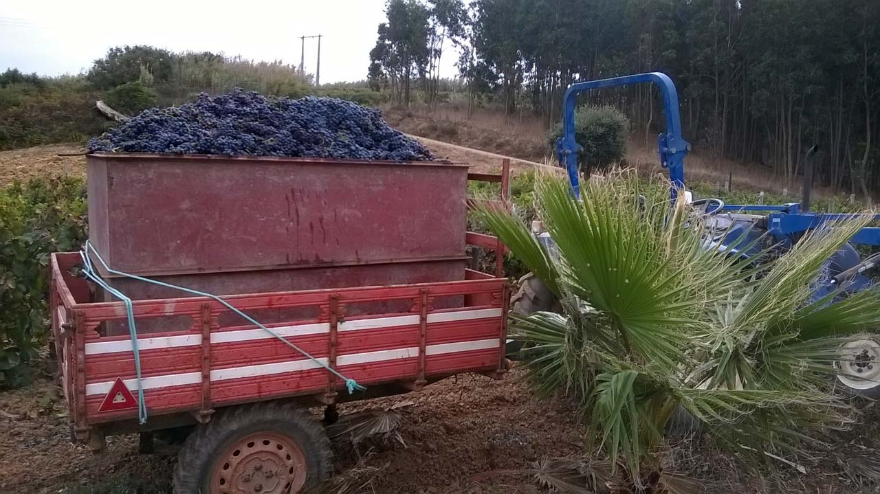 Another Load of Grapes