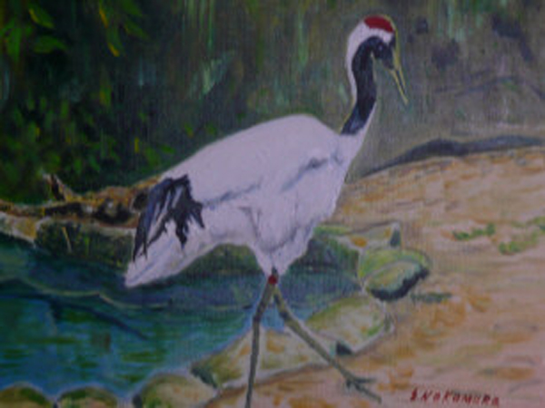 The red-crested Japanese crane.