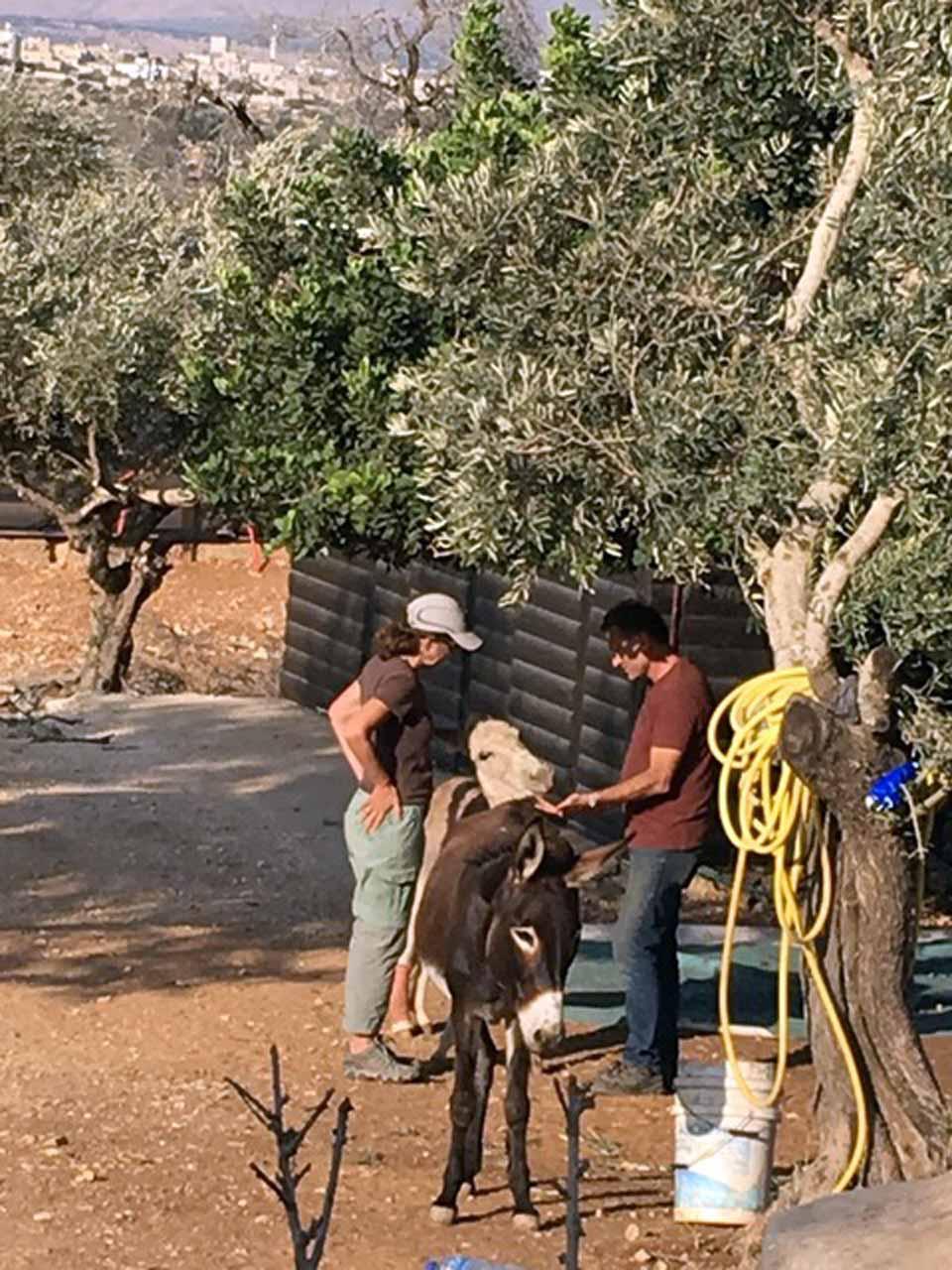 Megan McAlister Rudholm, Hilu (white donkey), Habiba (brown donkey) and Maad Abu-Ghazalah, at Daily Hugz, Asira al-Shimaliyah, Palestine