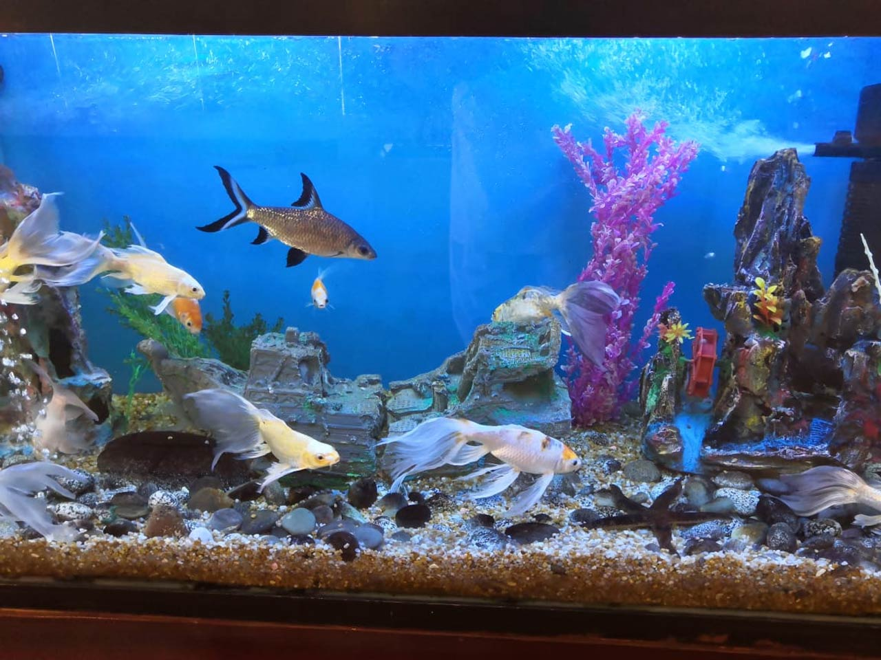 Aquarium at the Hotel Mehran Lobby