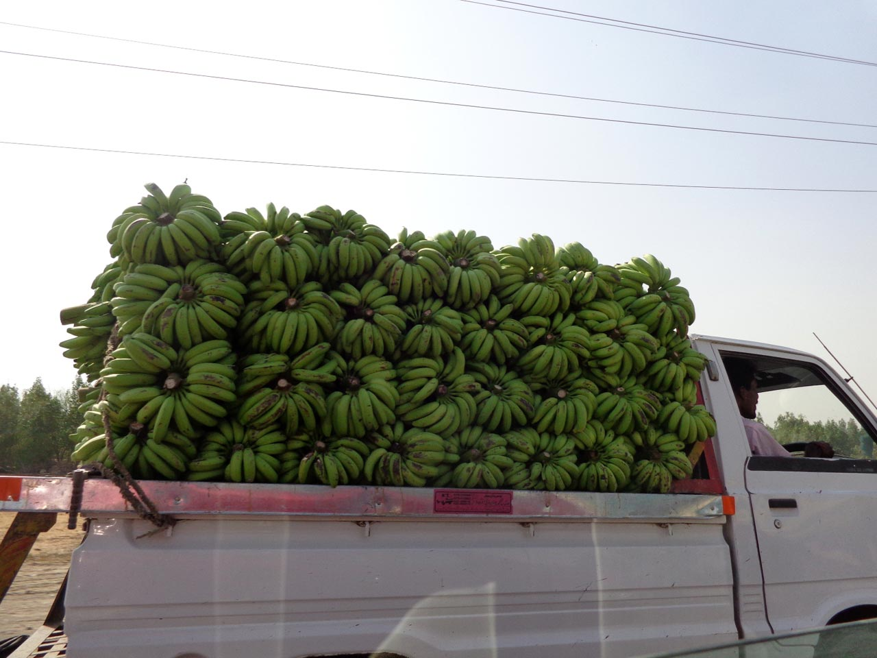 Banana being transported to Karachi from Hyderabad