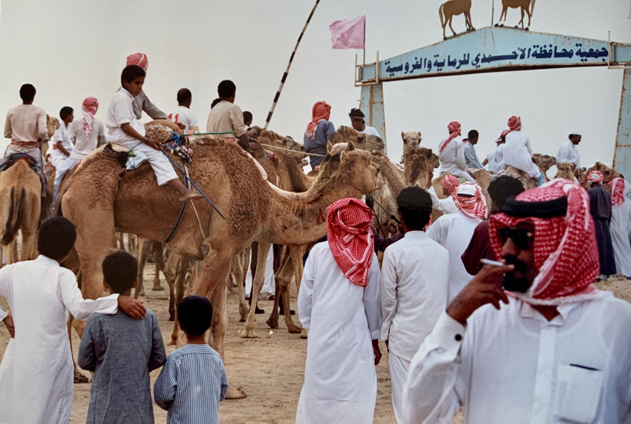 Camels and jockeys gather near the entrance to the racetrack. © Mark Lowey.