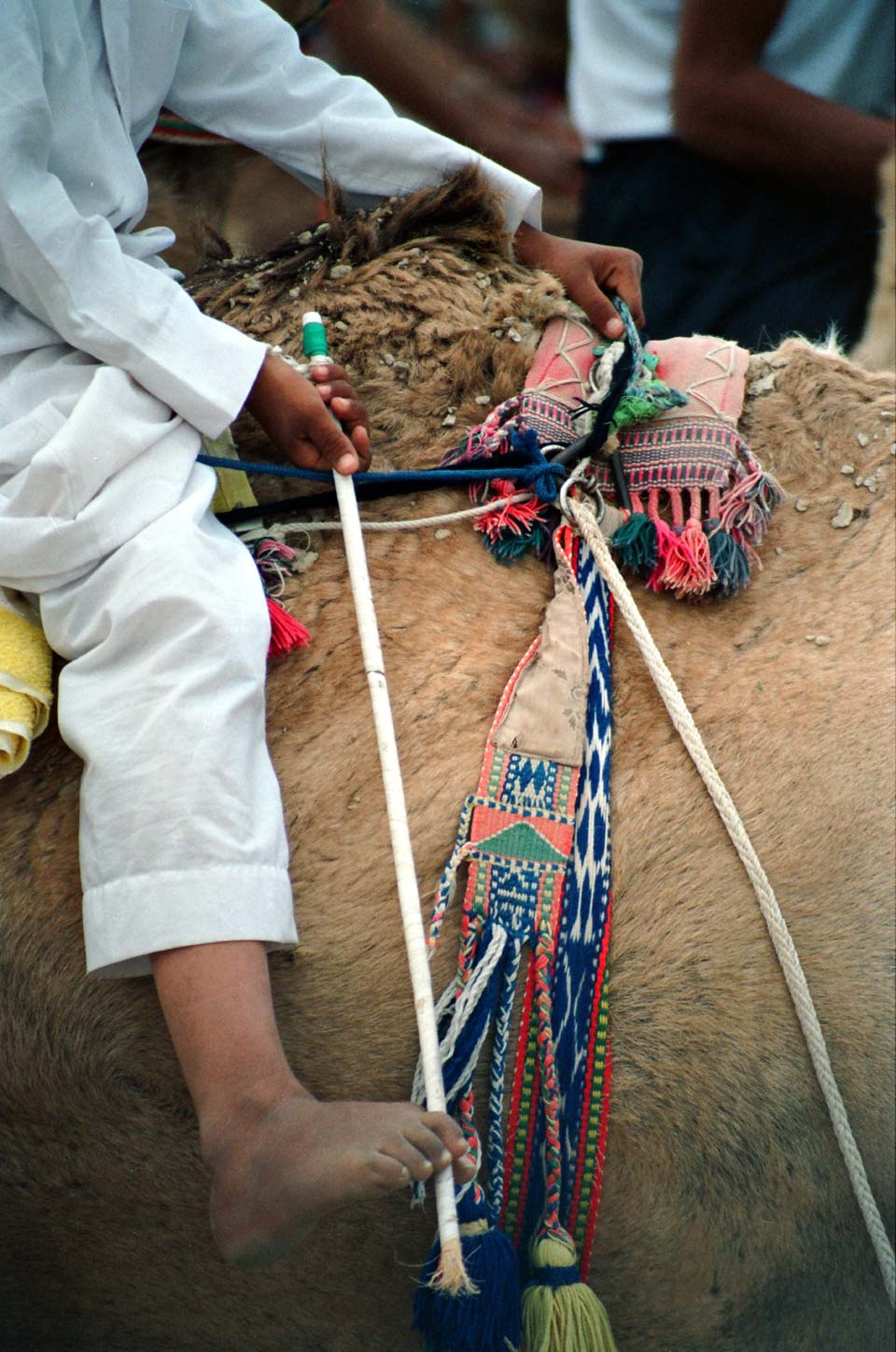 A jockey and his camel whip. © Mark Lowey.