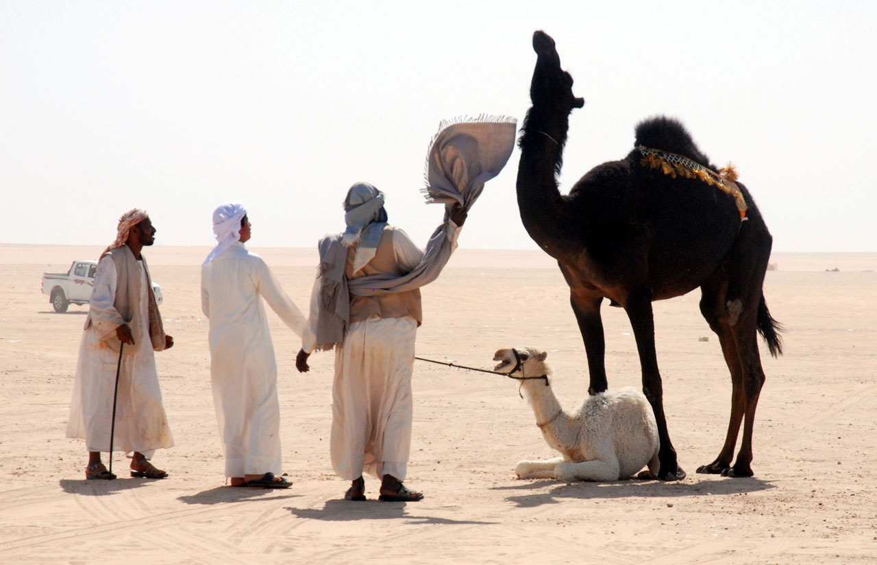 Camel minders dealing with a stubborn mother. © Mark Lowey