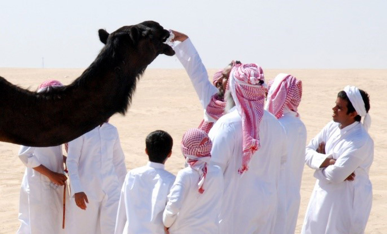 Thirsty camels enjoy a sip of bottled water. © Mark Lowey