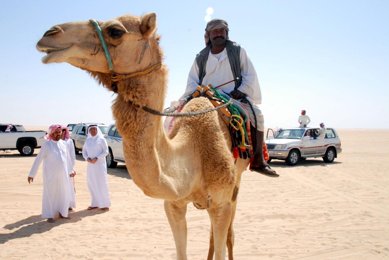 A minder of the Al Zayed herd. © Mark Lowey
