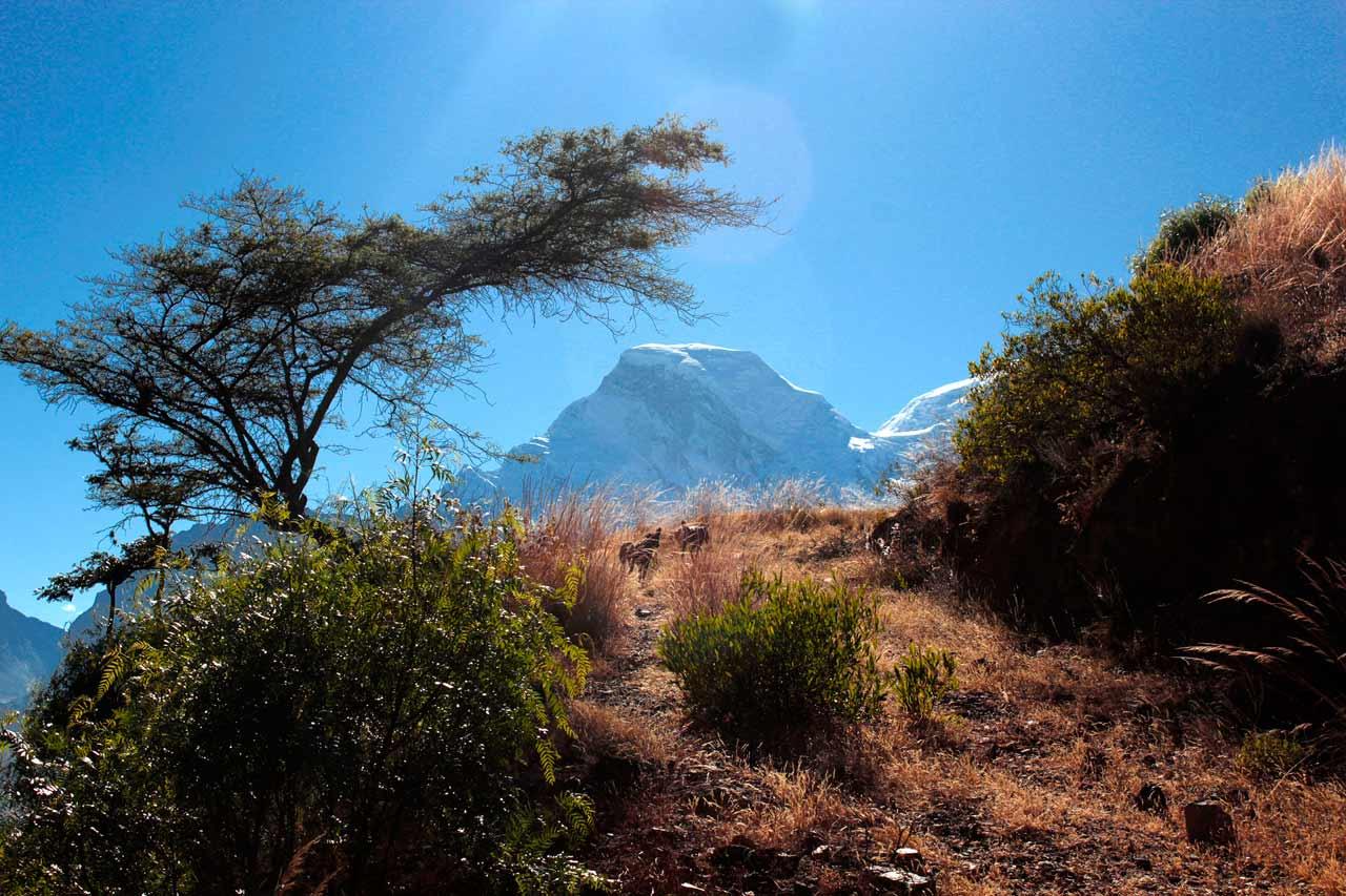 Huascaran and Perros