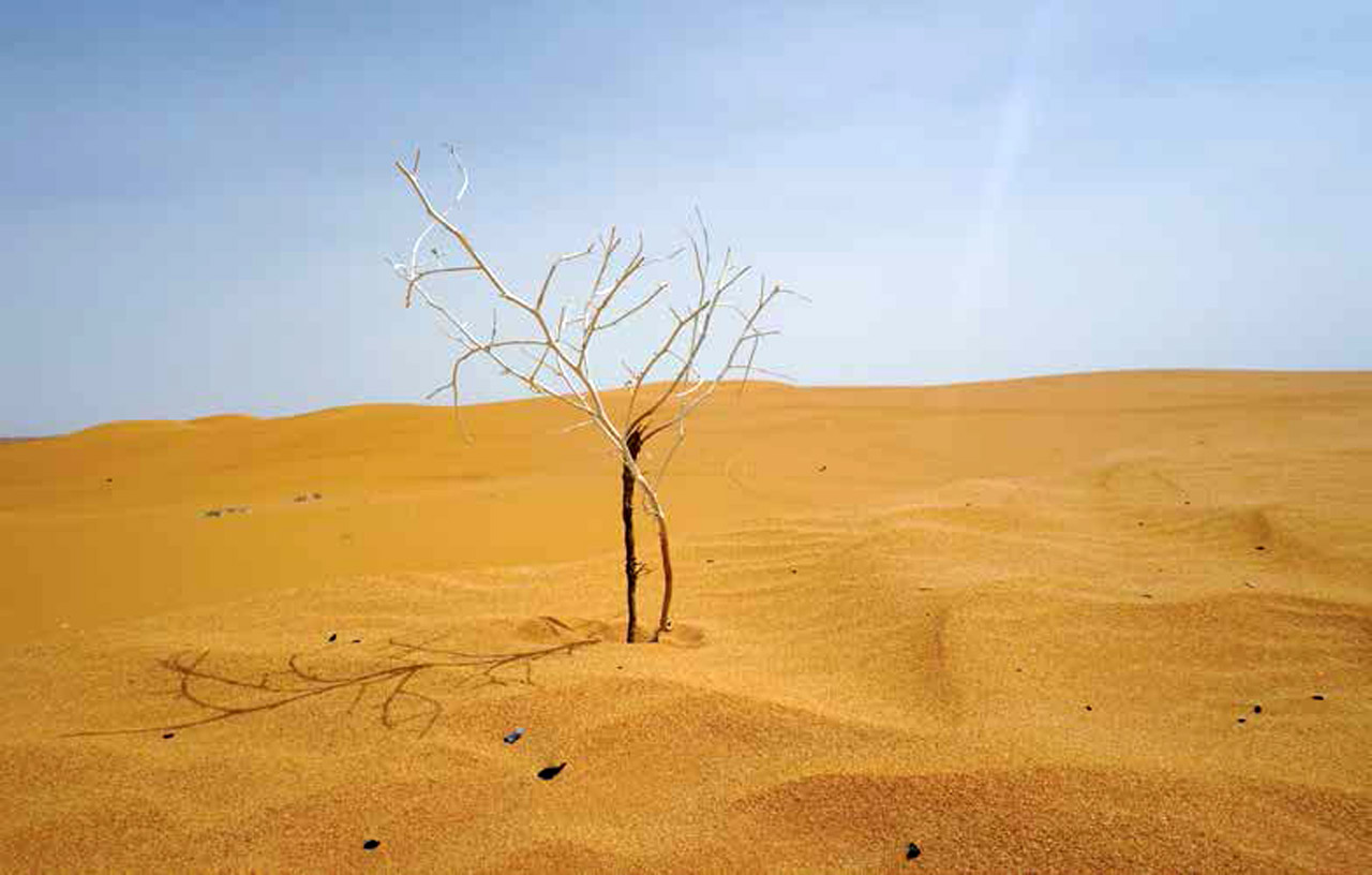 'Survivor' in the Red Sands