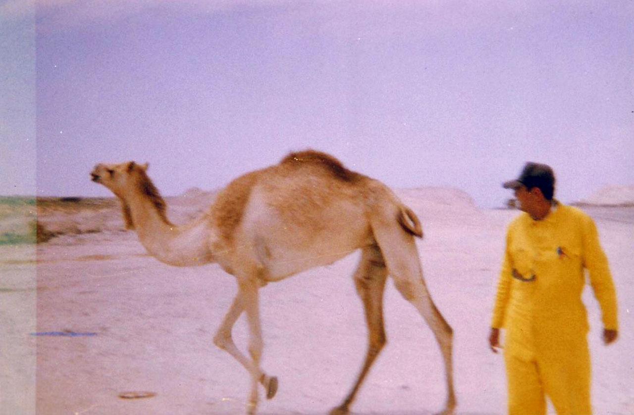 Camels at Al Shahaniya
