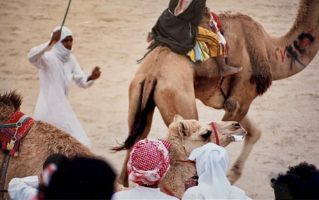 The Camel Races of Kuwait – A Photo Essay