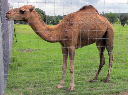1 Camel + 1 Zebra + 3 Donkeys = Lunch with Stan & Peggy McGinley