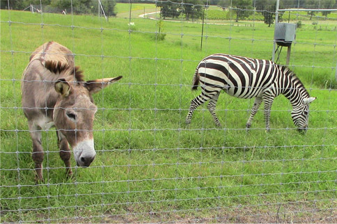 1 Camel + 1 Zebra + 3 Donkeys = Lunch with Stan & Peggy McGinley