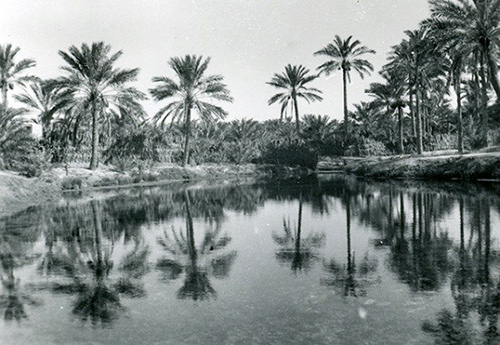 Aramco ExPats - Beneath the Oasis