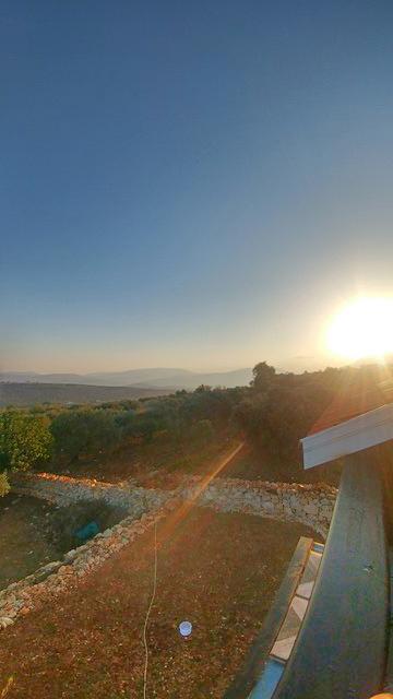 Palestine Olive Harvest Trip