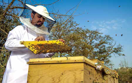 Sweet Success - al-Baha Beekeepers Giving Both Economy and Ecology a Boost
