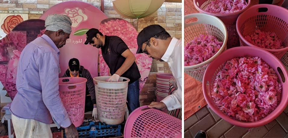 Taif's Culinary Rose