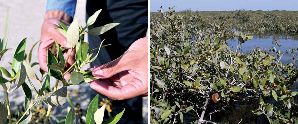 2 Million Mangroves Added to Carbon Front Line