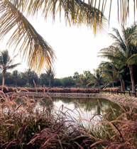 Coming Up for Air in Yanbu' - Pearl of the Red Sea