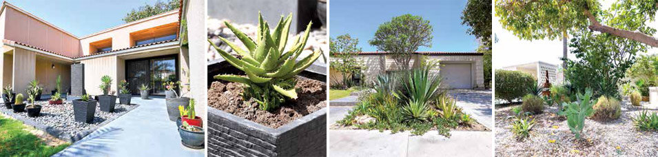 Dhahran Residents Respond Robustly to First Xeriscape Contest