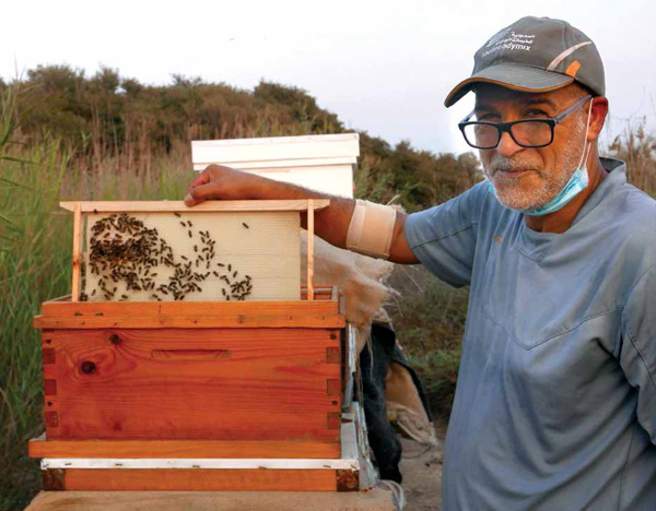 Sweet, Mangrove Honey