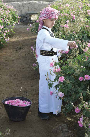 The Beauty and Fragrance of al-Taif