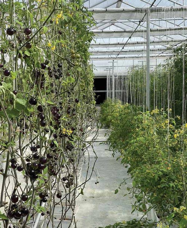 Vertical Farming Trial Comes to Dhahran