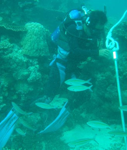 Buoys Protect Vital Coral Reefs