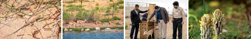 Abqaiq Nature Reserve is First of its Kind in Eastern Province