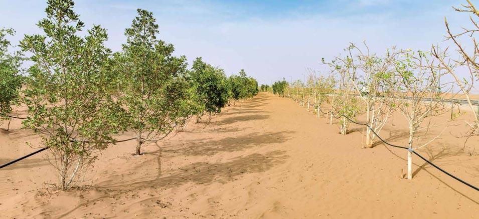 Desert Life Thrives at Khurais