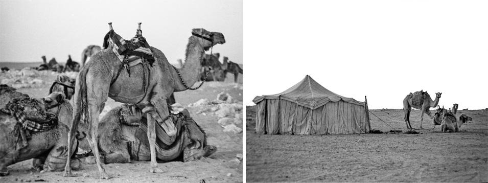 Sakakah Camel Race and Al-Jowf, Saudi Arabia - Chapter II
