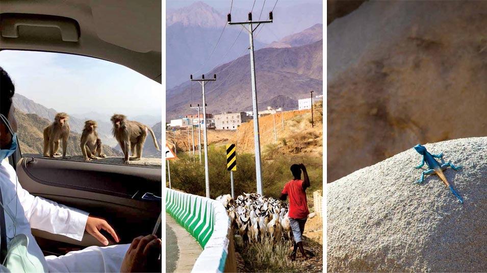 Trekking the Mountains of Al Baha