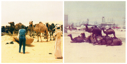 Colleen with Camels and Camels at watering pond