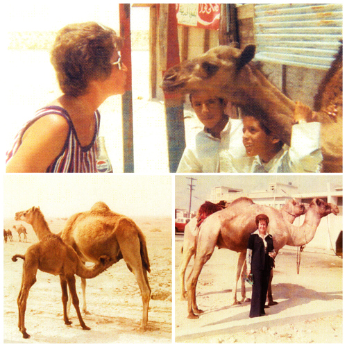 Colleen leaning into a baby camel, and standing beside full-grown camels