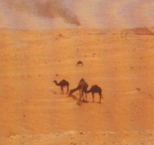 Baren desert with camels