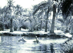 Oasis at the Sufwa Gardens